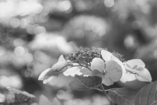 flower817-3