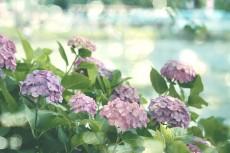 flower819-2
