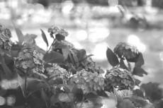 flower819-3