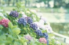 flower820-2