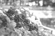 flower820-3