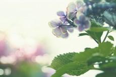 flower821-2