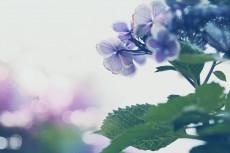 flower821
