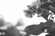 flower821-3