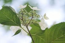 flower823-2