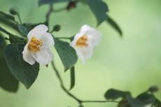 flower824-2