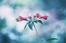 flower825