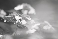 flower826-3