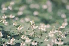 flower828-2
