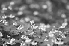 flower828-3
