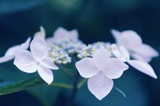 flower829-2
