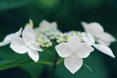 flower829