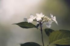 flower830-2