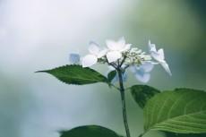 flower830