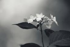 flower830-3