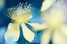 flower831-2