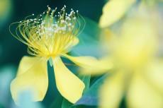 flower831