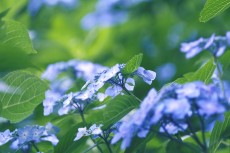 flower832