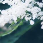 【高解像度】緑の中の庭七竈(ニワナナカマド)(3パターン)