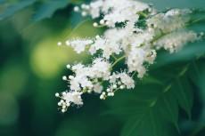 flower834