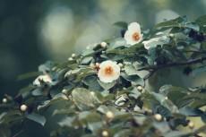 flower835-2
