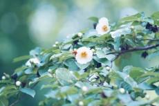 flower835
