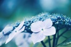 flower836-2