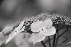 flower836-3