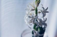 flower720