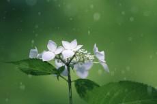 flower837