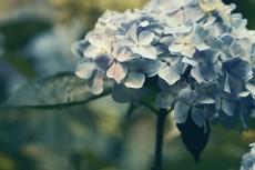 flower838-2