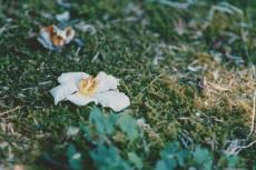 flower839