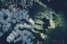 flower840-2