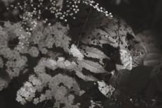 flower840-3
