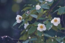 flower841-2