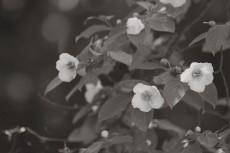 flower841-3