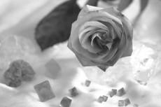flower842-2