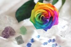 flower842
