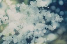 flower844-2