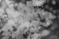 flower844-3