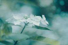 flower845-2