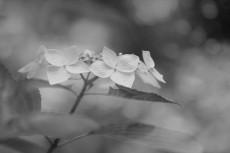 flower845-3