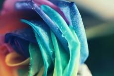 flower846-2
