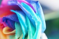 flower846