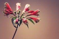 flower847-2