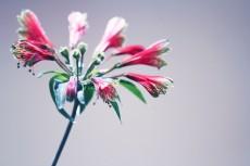 flower847