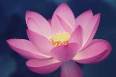 flower850-2