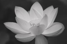 flower850-3