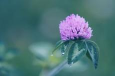 flower852-2