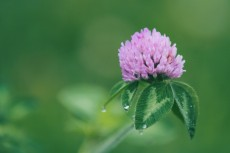 flower852
